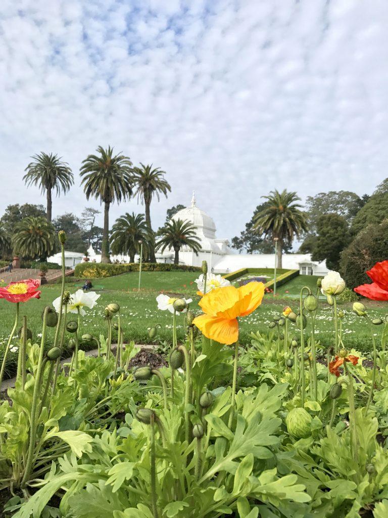 Golden Gate Park Mercedes Santana